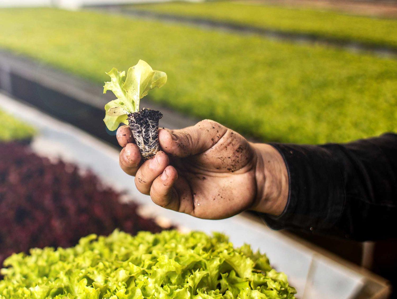 Bioenterprise man holding small plant connect innovate grow