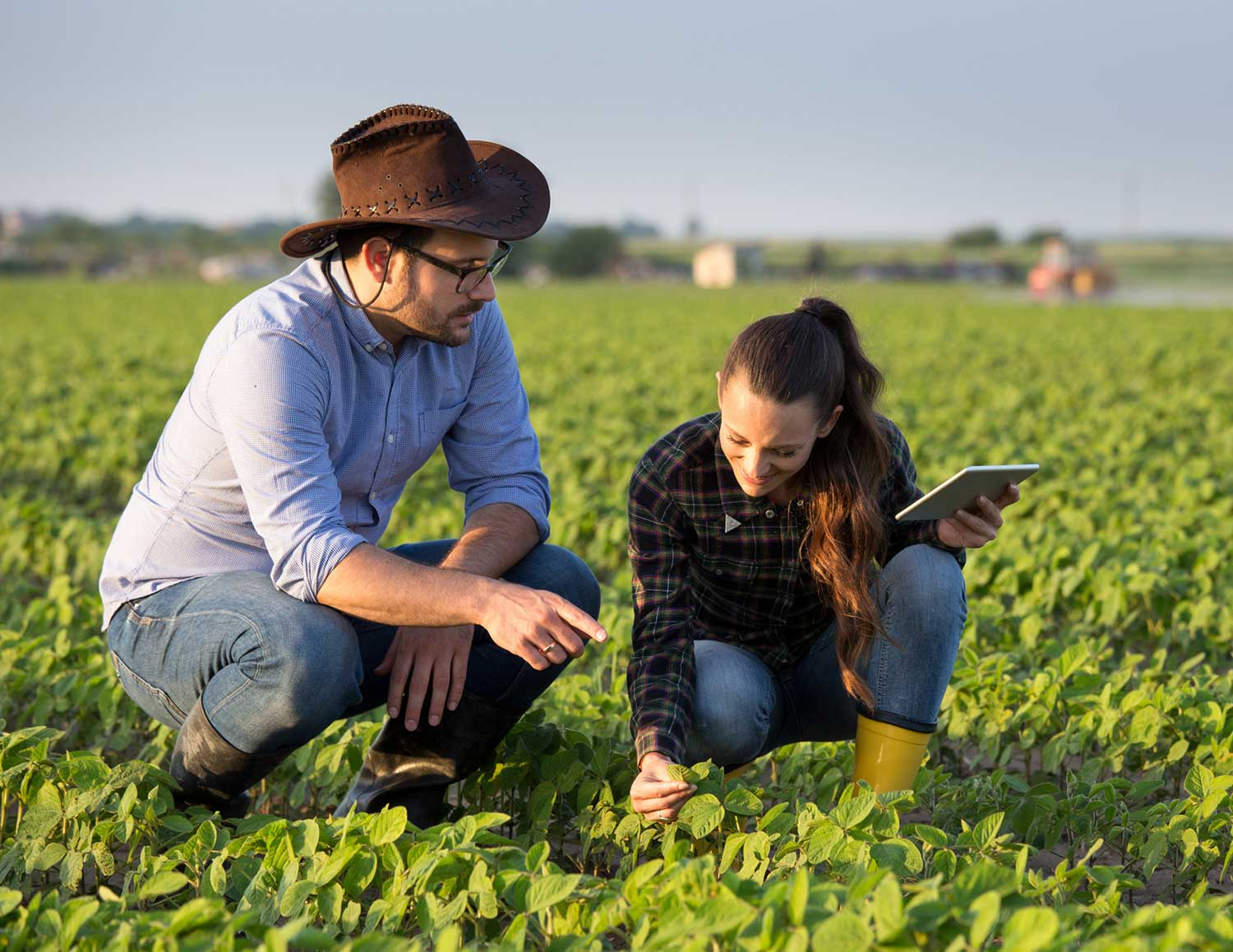 Man and woman examining plants in a field connect innovate grow