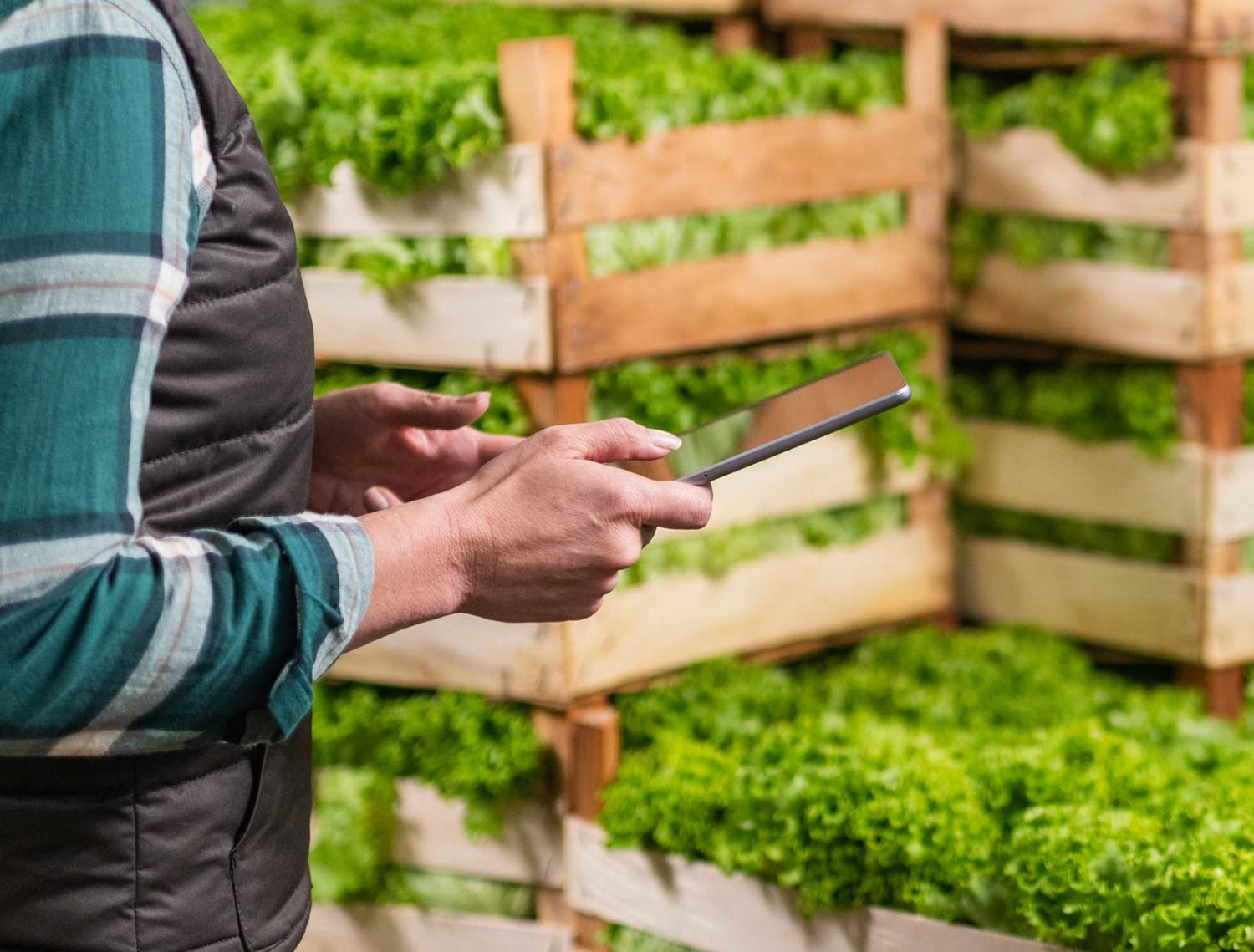Testimonials person using a tablet infront of green plants