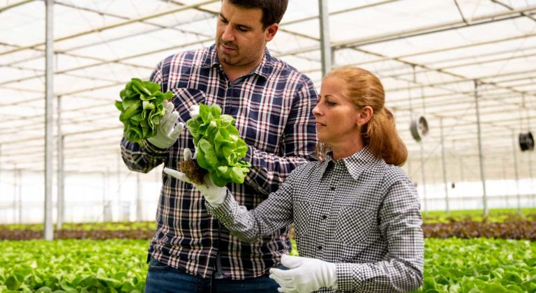 two researchers are studying plants in greenhouse partnership