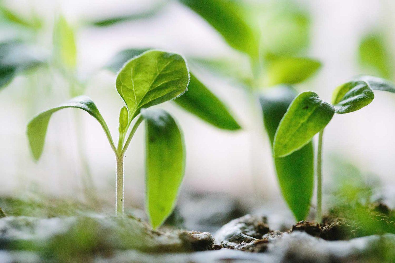 AgTech Acceleration Program green plants