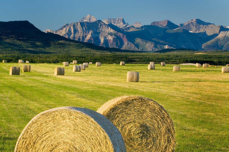 Alberta Yield Program hay bales in farm field in rural landscape